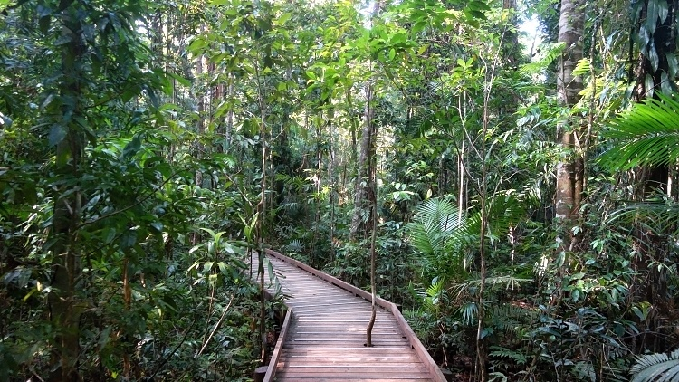 Daintree Rainforest, Queensland, Australia