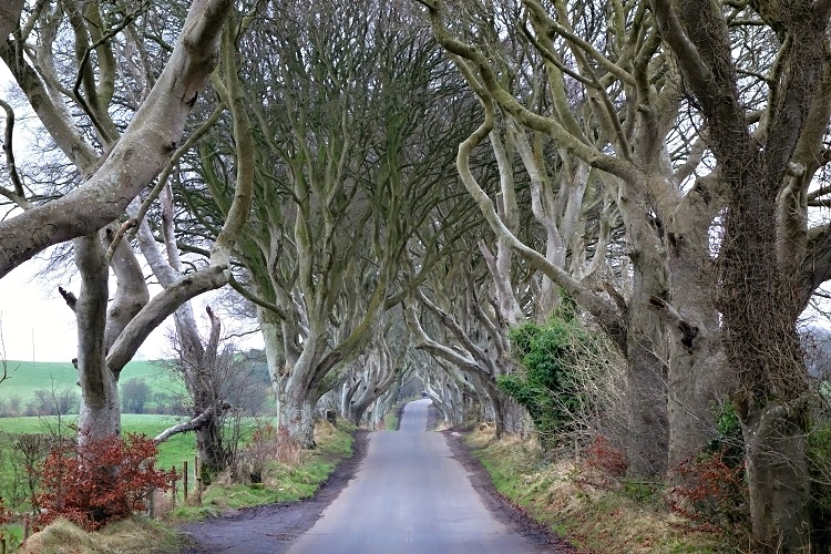 Unusually quiet Dark Hedges in Northern Ireland - beautiful or scary?