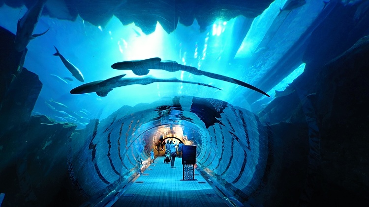 Dubai Aquarium - the city keeps its visitors entertained in any type of weather