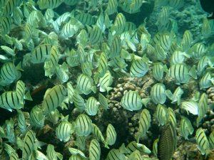Underwater in Hanauma Bay, Oahu, Hawaii