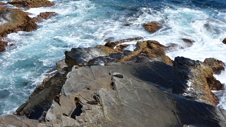You can watch seals in their natural habitat near the Admirals Arch